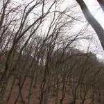 píseň stromů